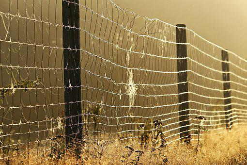 Away, Fog, Fence, Spider Webs, Grass, Mood, Autumn
