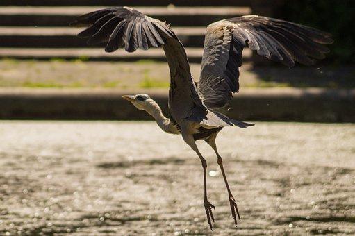 Bird, Fly, Wings, Feather, Wildlife, Beak, Wild