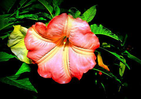 Catalpa, Blossom, Bloom, Bignoniaceae Plants