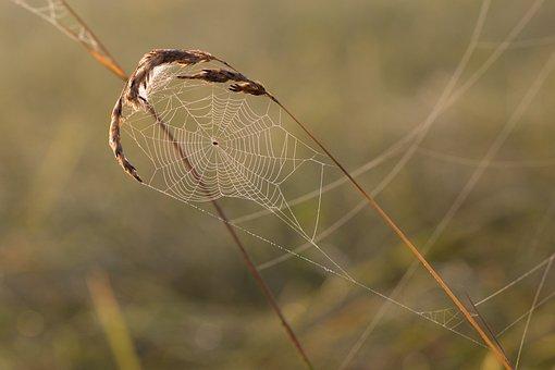 Cobweb, Grass, Spider, Dewdrop, Dew, Drop Of Water