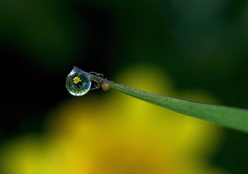 Dew Drop, Macro, Dew, Nature, Spider, Wet, Morning