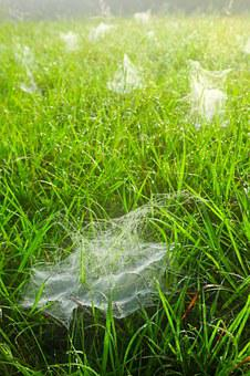 Spider Webs, Grass, Dew, Drops, Droplets, Wet, Green