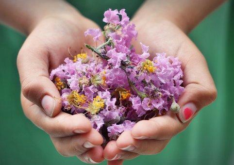 Hands, Child, Flower, Rustic, Garden, Farm, Childhood