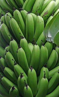 Banana, Fruit, Unripe, Green, Bunch, Tropical