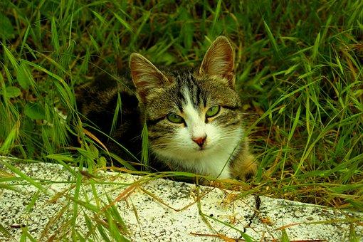 Cat, Green Eyed, Innocent