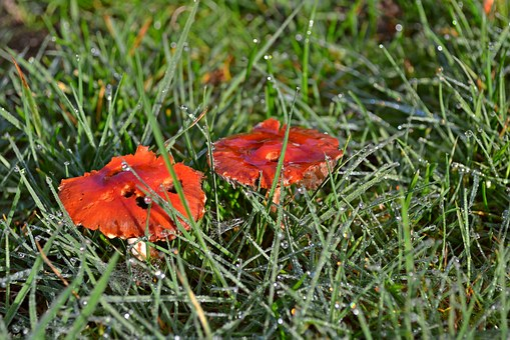 Mushrooms, Fungi, Red, Green, Grass, Autumn