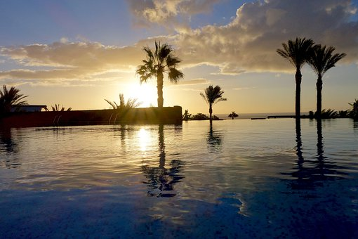 Palm Trees, Pool, Holiday, Hotel, Mood, Swimming Pool