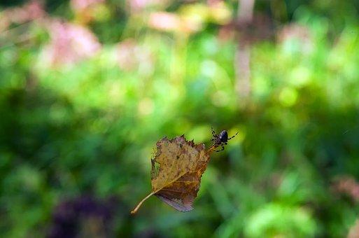 Summer, Sheet, Spider, Leaves, Nature, Greens, Plant