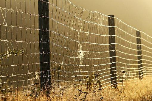 Away, Fog, Fence, Spider Webs, Grass, Mood, Autumn