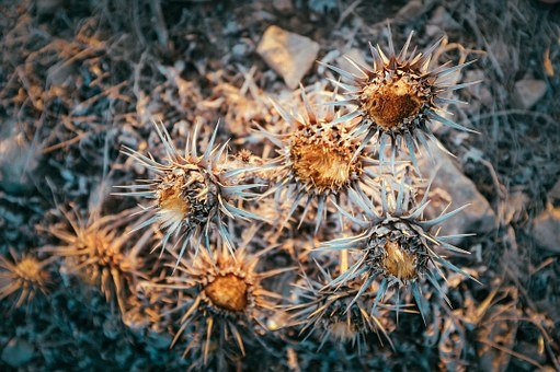 Decay, Bloom, Nature, Botany, Botanist, Floral, Winter