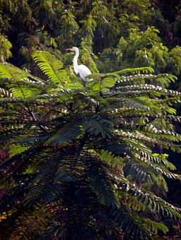 Flying, Nature, Bird, Tropical Birds, Encyclopedia