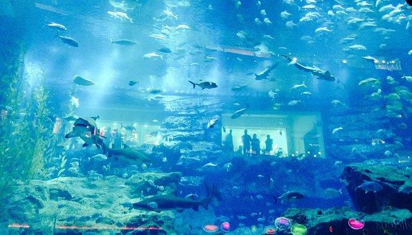 Dubai, Aquarium, Fish