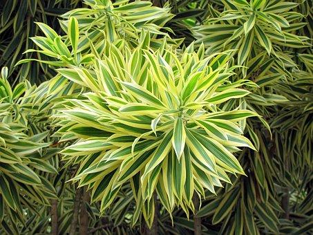 Bush, Plant, Brasileirinho, Nature, Tropical Flower