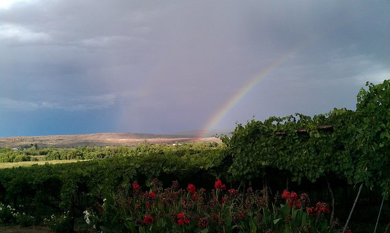 Rainbow, Winery, South Africa, Norhern Cape, Landscape