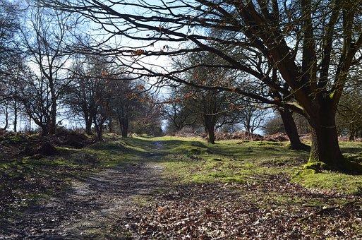 Woods, Forest, Cannock, Nature, Landscape, Tree, Autumn