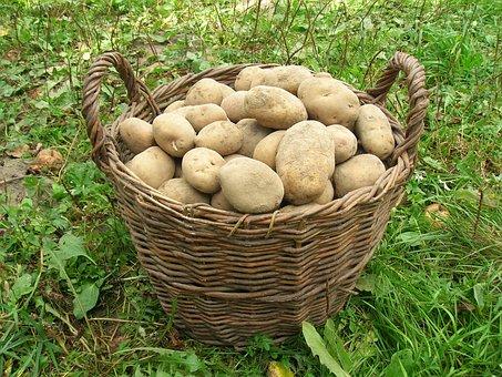 Potatoes, Basket, Harvest