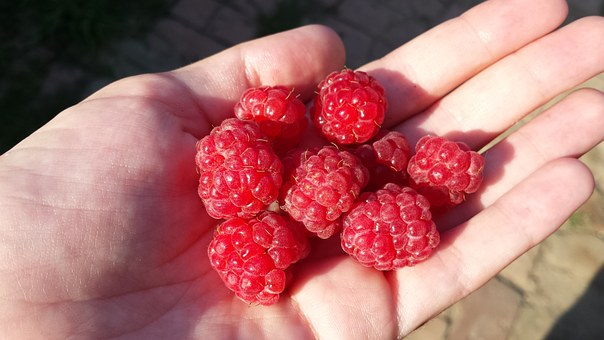 Raspberry, Berry, Red Berries, Juicy, Summer, Sun