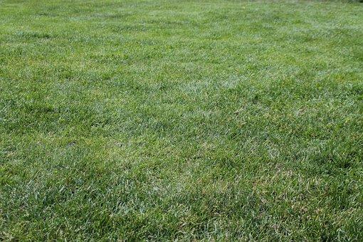 Meadow, Rush, Grass, Green, Pfanzen, Nature