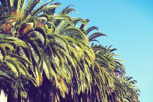 Plam, Tree, Summer, Spain