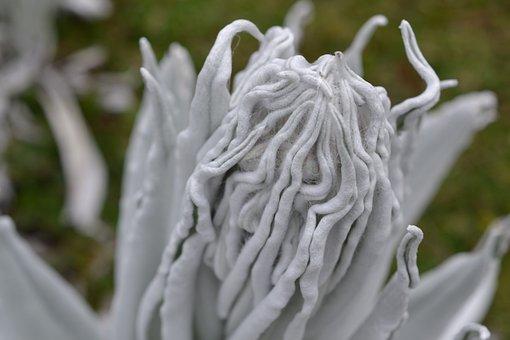 Espeletia, Plant, Flower, Trekking, Flora, Colombia