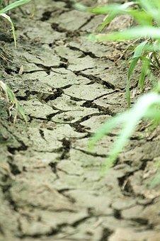 Summer, Cracket, Ground, Earth, Landscapes, Nature