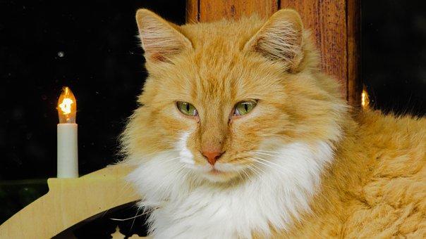 Cat, Eyes, Beauty, Animal, Kitten, Kitty, Cute