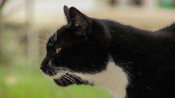 Cat, Hunting, Alert, Animal, Mammal, Black, Feline