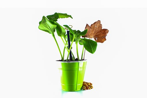 Green Leaf, Dead Leaf, Pumpkin Leaf, Earth, Green