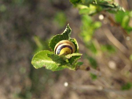 Snail, Shell, Mollusk, Branch