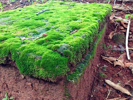 Mosses, Bryophytes, Green