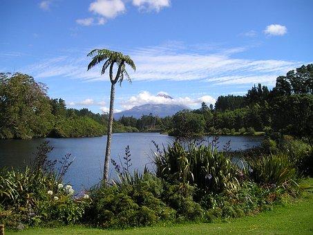 New Zealand, Volcano, Lake, Rießenfarn, Ferns
