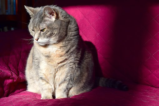 Cat, Sunlight, Couch, Animal, Domestic, Feline, Pet