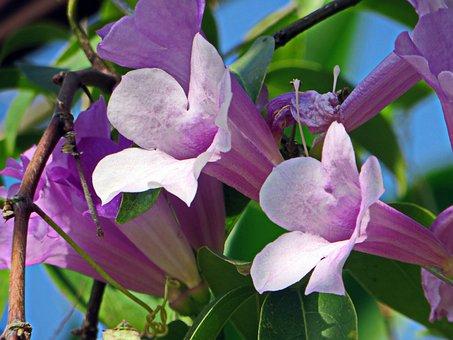 Laos, Flower, Purple Flower, Bouquet, Purple Flowers