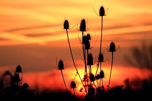 Sunrise, Sky, Landscape, Nature, Mood, Morgenstimmung