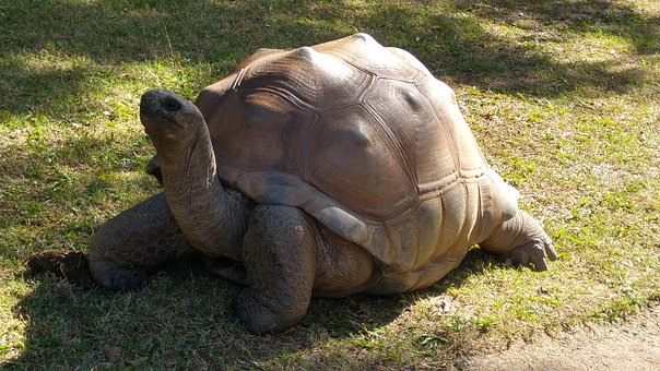 Turtle, Nature, Animal, Animals, Carapace, Reptile, Zoo