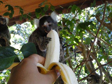 Monkey, Banana, Feed, Natural, Animal, Cute, Wildlife