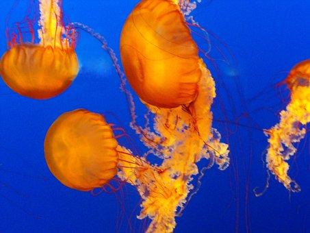 Sea, Fish, Water, Ocean, Marine, Animal, Nature