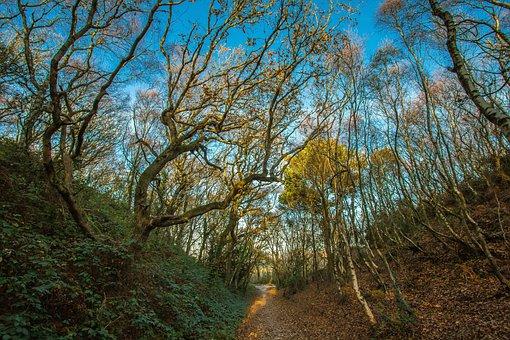 Forest, Autumn, Valley, Hengistbury Head, England