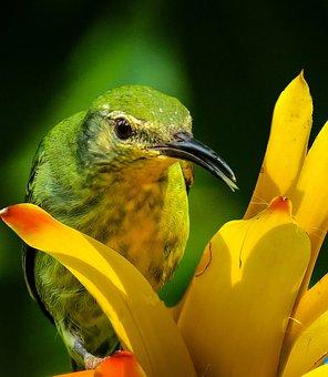 Bird, Honeycreeper, Close, Colorful, Color, Blossom