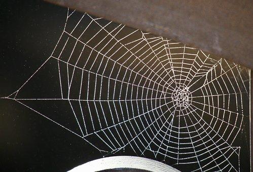 Spider, Winter, Nature, Italy, Fog, Light, Sardinia