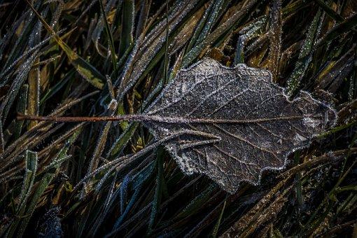 Leaf, Hoarfrost, Frozen, Frost, Leaves, Winter, Autumn