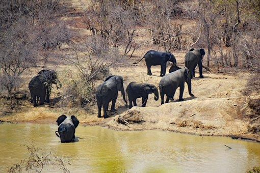 Mole National Park, Ghana, West Africa, Africa