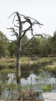 Moor, Wetland, Swamp, Nature Reserve, Moorland
