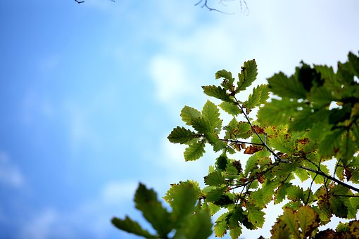 Autumn, The Leaves, The Scenery, China, Green Leaf