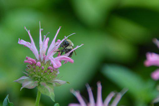 Bee, Bumblebee, Summer, Meme, Insect, Pollinator