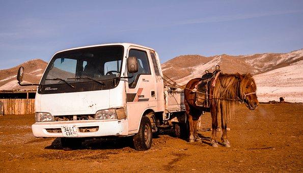 Horse, Vehicle, Car, Transportation, Transport, Animal