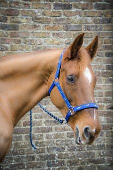 Horse, Irish Horse, Ireland, Mare, Dents Farm