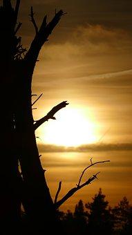 Tree, Autumn, Sunset, Nature, Season, Forest, Natural