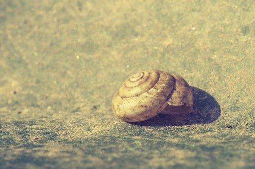 Shell, Broken, Empty, Close, Leave, Nature, Damaged