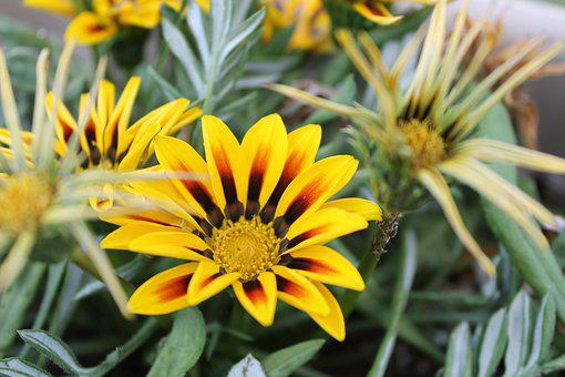 Yellow, Plant, Nature, Green, Natural, Flower, Leaf